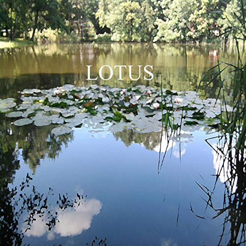 Lotus - Rainer Theobald CD